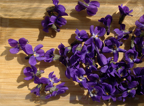 first-violets-from-the-yard.png
